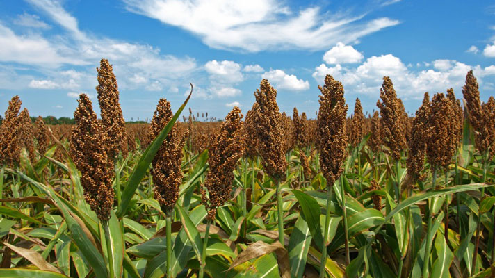 Special Use Valuation in Texas (Part II): Agricultural Use ... |Texas Agriculture